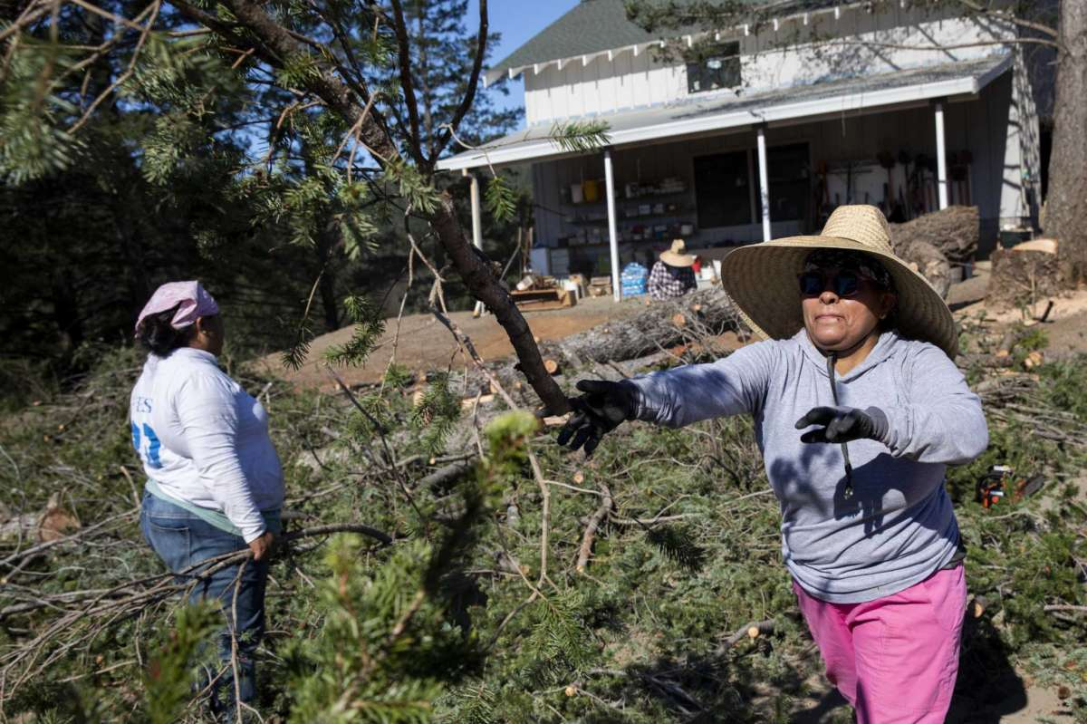 Vicenta Ramirez (left) and Gloria Navarrete clear brush at Smith-Madrone Vineyards in St. Helena. In September 2020, the Glass Fire surrounded the Smith-Madrone Vineyards property, and its owners are working hard to create defensible space by cutting down trees near structures and clearing dead and dying brush.